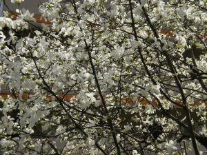 春は爛漫咲き乱れ・・・